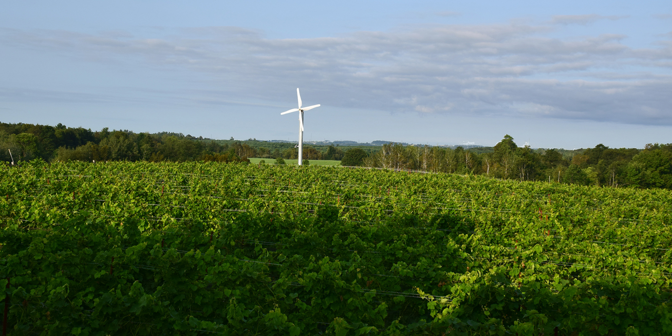 Adamo Estate Winery vineyard summer overview