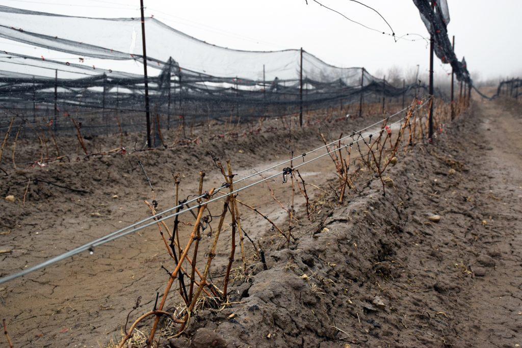 spring muddy vineyard