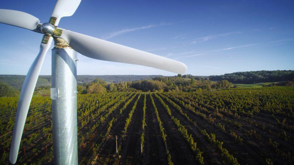 aerial vineyard view